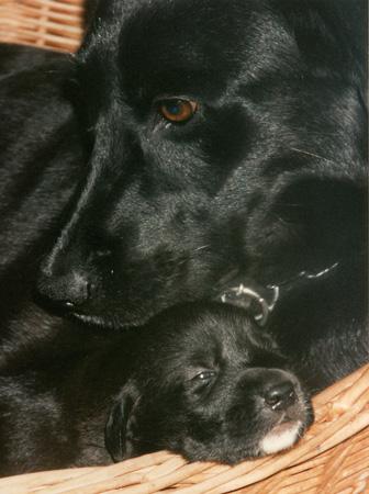 Beratung – Hundeschule Guggisberg