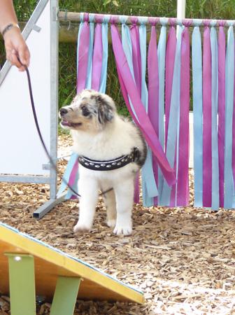 Herzlich willkommen – Hundeschule Guggisberg