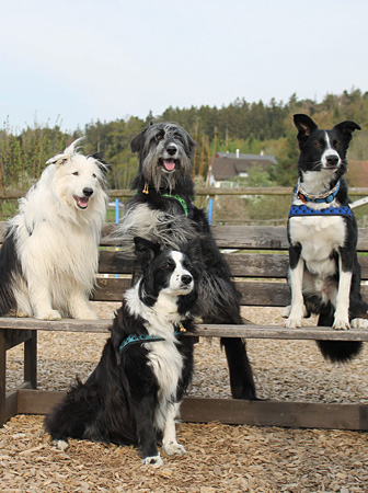 Kursdaten – Hundeschule Guggisberg