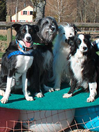 Persönlich – Hundeschule Guggisberg