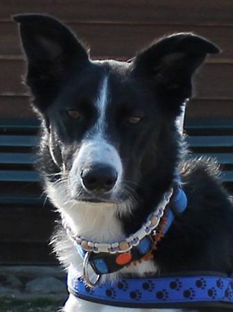 Unterrichtsziele – Hundeschule Guggisberg