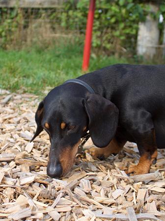 Links – Hundeschule Guggisberg
