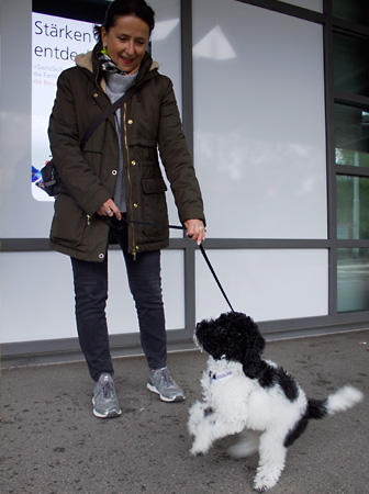 Obligatorische Kurse Kanton Zürich – Hundeschule Guggisberg