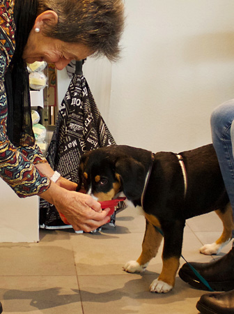 Theorie- und Praxiskurse – Hundeschule Guggisberg