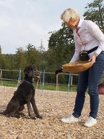 Unterrichtsformen – Hundeschule Guggisberg
